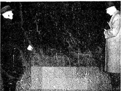 Joseph O'Connor (left) pointing out the location of Gertrude Curran's grave to an Irish Press reporter. The Irish Press, 11 November 1953.
