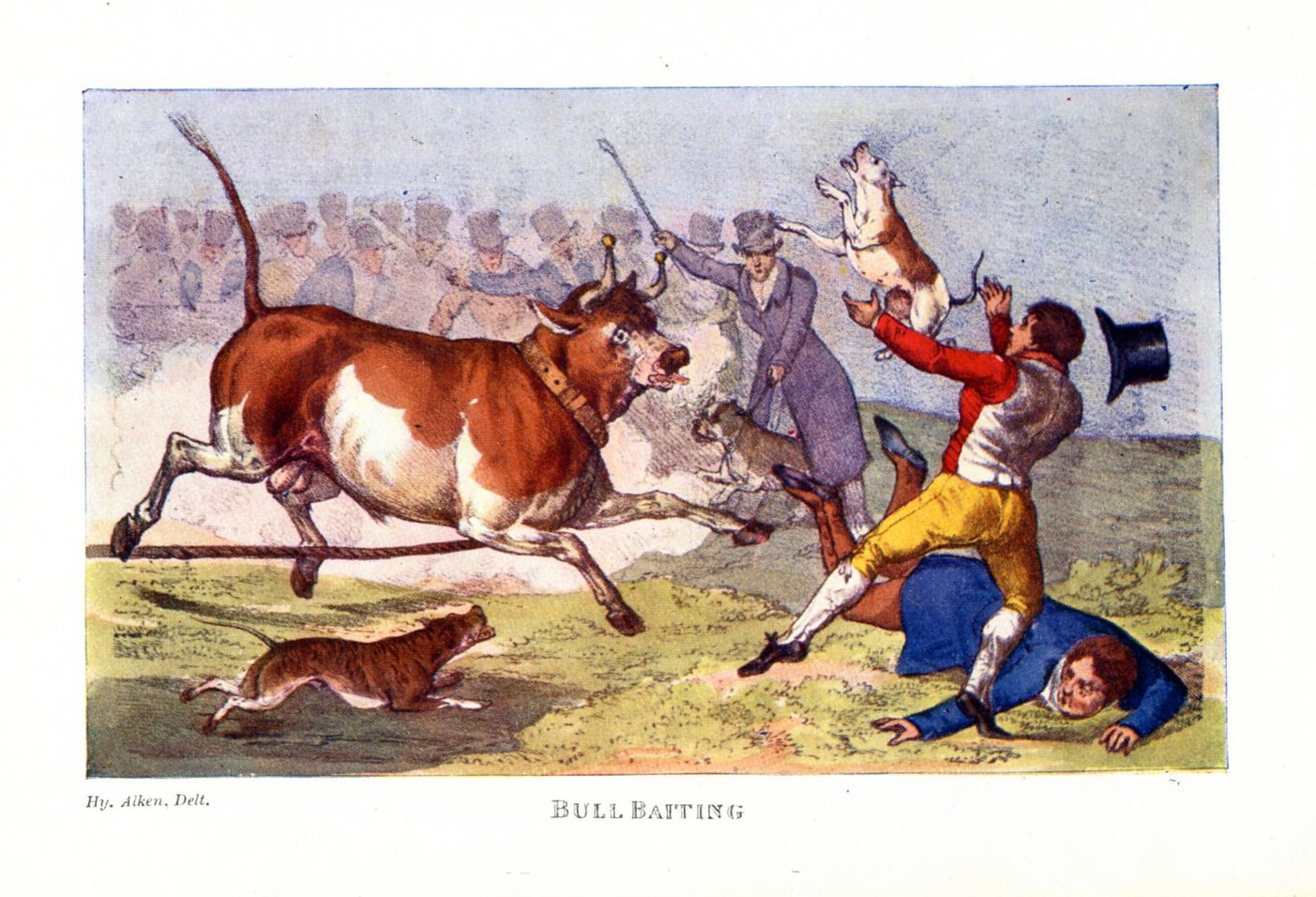 Culture Of Violence >> Bull-baiting in eighteenth century Dublin. | Come Here To Me!